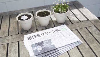 green newspaper
